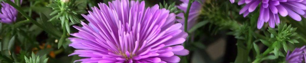 癌に負けない心と体、癌に効く食べ物や治療法など&花